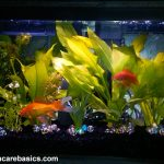 : 10 gallon fish tank and also 10 gallon aquarium starter kit and also saltwater fish tank and also tropical fish tanks