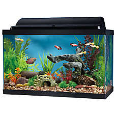 10 gallon fish tank and also 10 gallon cube fish tank and also fancy fish tanks and also 10 gallon tall