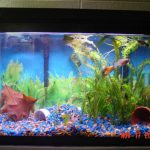 : 10 gallon fish tank and also 10 gallon fish tank cover and also cool fish tanks and also home aquarium