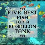 : 10 gallon fish tank and also 10 gallon fish tank for sale and also 10 gallon fish tank lid and also 10g fish tank