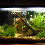 : 10 gallon fish tank and also 10 gallon saltwater fish tank and also aqua one fish tank