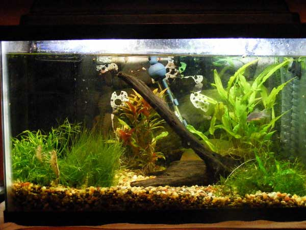 10 gallon fish tank and also 10 gallon saltwater fish tank and also aqua one fish tank