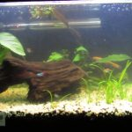 : 10 gallon fish tank and also 10 gallon tank size and also aquarium decorations and also 10 gallon aquarium heater