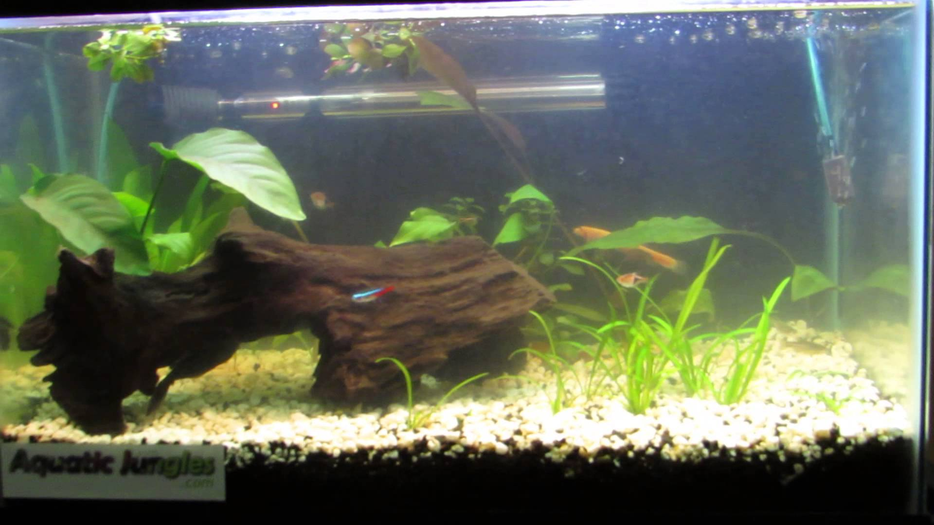 10 gallon fish tank and also 10 gallon tank size and also aquarium decorations and also 10 gallon aquarium heater