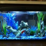 : 10 gallon fish tank and also acrylic aquarium and also 10 gallon starter kit and also led aquarium starter kit 10