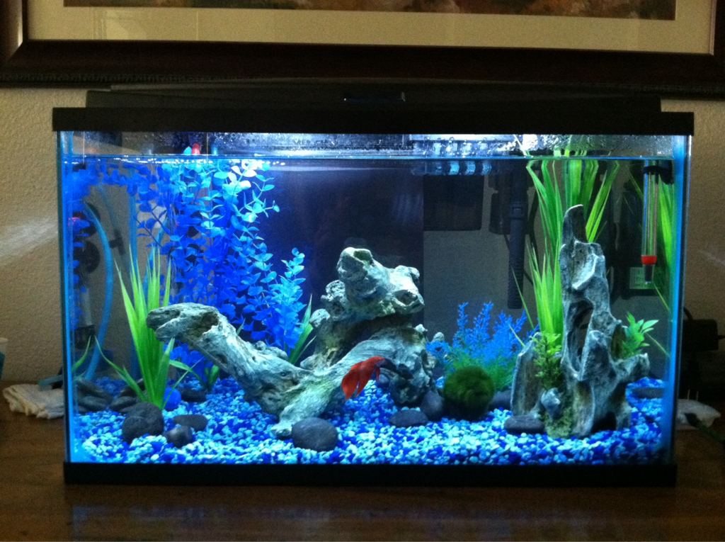 10 gallon fish tank and also acrylic aquarium and also 10 gallon starter kit and also led aquarium starter kit 10
