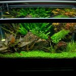 : 10 gallon fish tank and also aquarium stand and also cool 10 gallon fish tank and also aquarium tanks