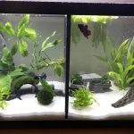 : 10 gallon fish tank and also best 10 gallon aquarium kit and also fish tank air pump and also fluval fish tank