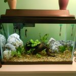 : 10 gallon fish tank and also fish tank and also biorb fish tank and also corner fish tank