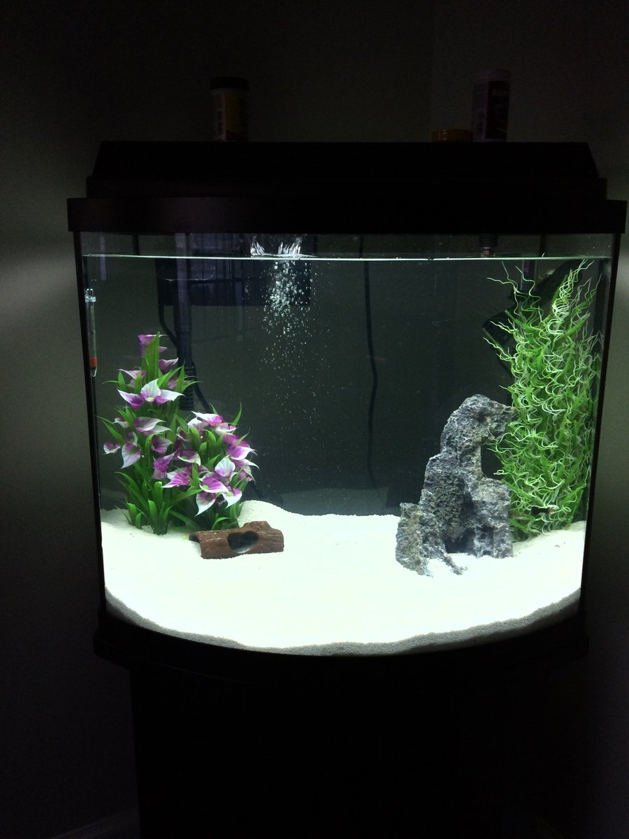 10 Gallon Fish Tank And Also