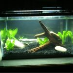 : 10 gallon fish tank and also hexagon fish tank and also 10 gallon starter fish tank and also turtle aquarium
