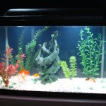 : 10 gallon fish tank and also home aquarium tanks and also cold water aquarium fish and also fish tank filtration