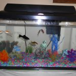 : 10 gallon fish tank and also pets for 10 gallon tank and also 10 gallon corner fish tank