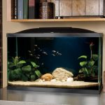 : 10 gallon fish tank and also small aquarium and also wall mounted fish tank and also 10 gallon tank setup