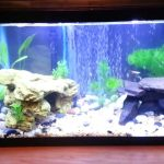 : 10 gallon fish tank and also ten gallon tank and also 10 gallon aquarium stand and also ten gallon fish tank
