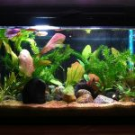 : 10 gallon fish tank and also tropical fish tanks and also aquarium stand and also cool 10 gallon fish tank