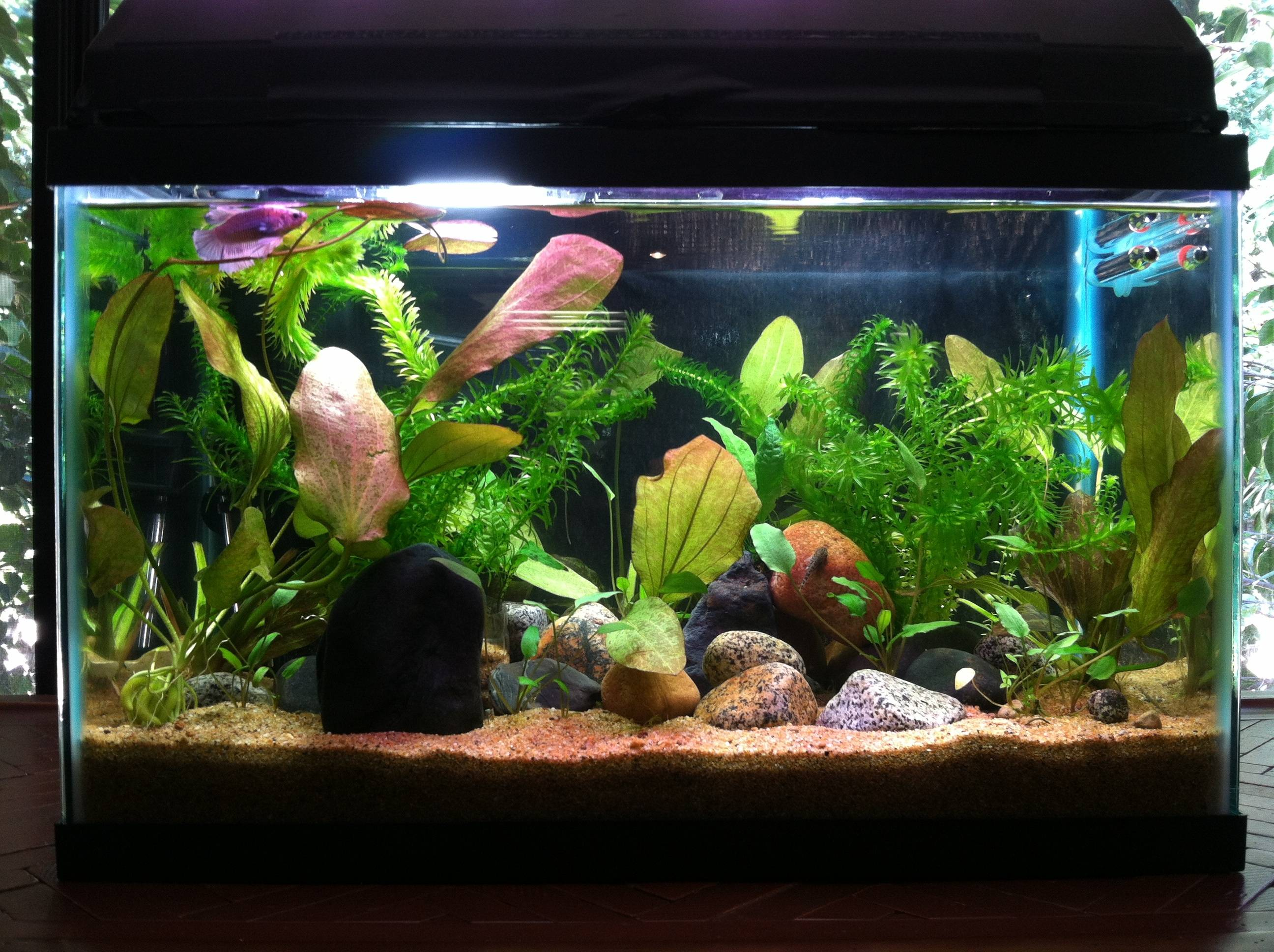 10 Gallon Fish Tank Choices You Can Consider