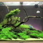 Aquarium Plants Ideas – 5 Top Visual Designs You Need to Know