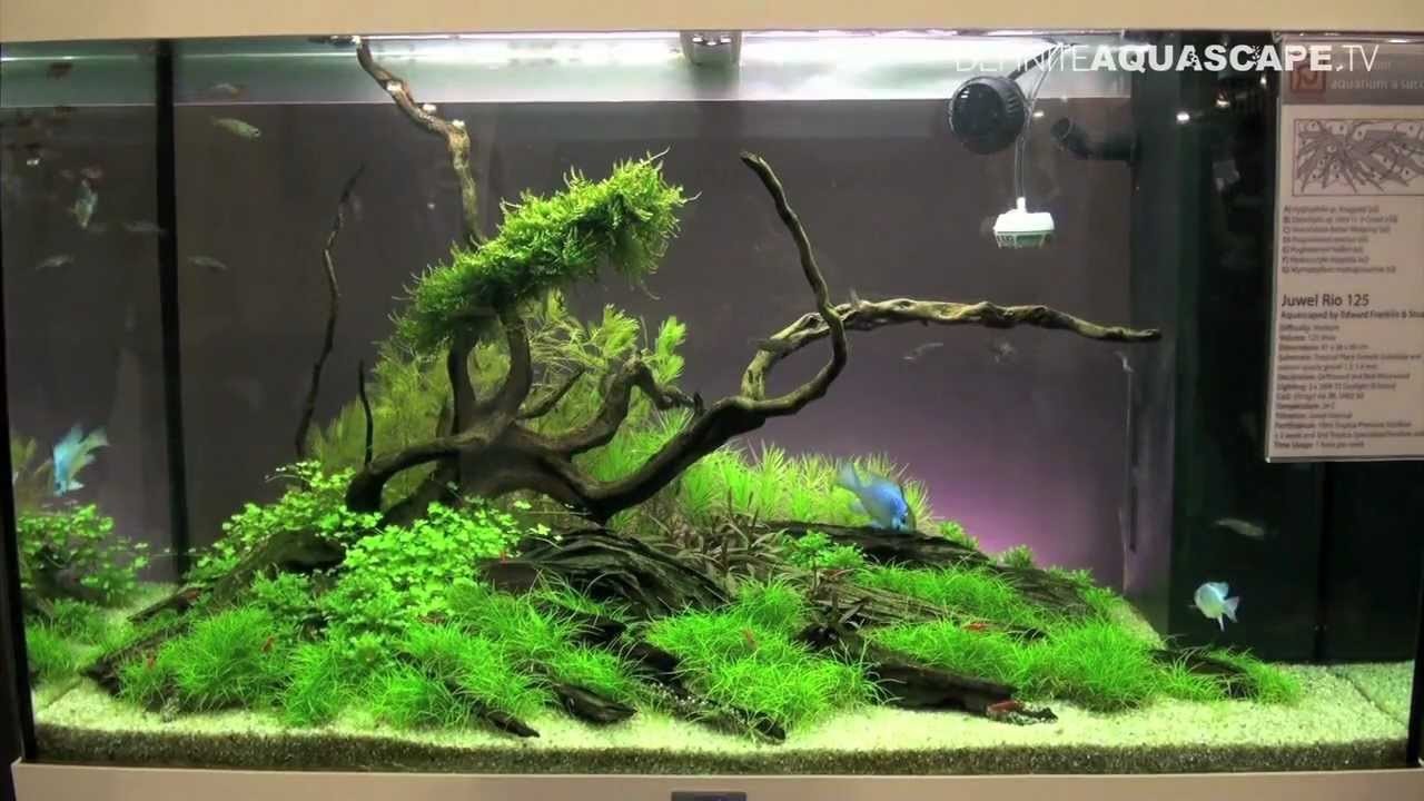 Aquarium Plants Ideas Be Equipped 5 Gallon Planted