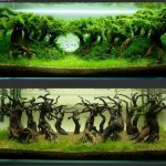 : Aquarium plants ideas be equipped aquarium fish and plants be equipped natural freshwater aquarium be equipped best looking aquarium