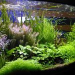 : Aquarium plants ideas be equipped best light for planted tank be equipped small planted fish tank be equipped aqua landscaping aquariums