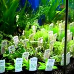 : Aquarium plants ideas be equipped best substrate for planted freshwater aquarium be equipped sand substrate planted aquarium