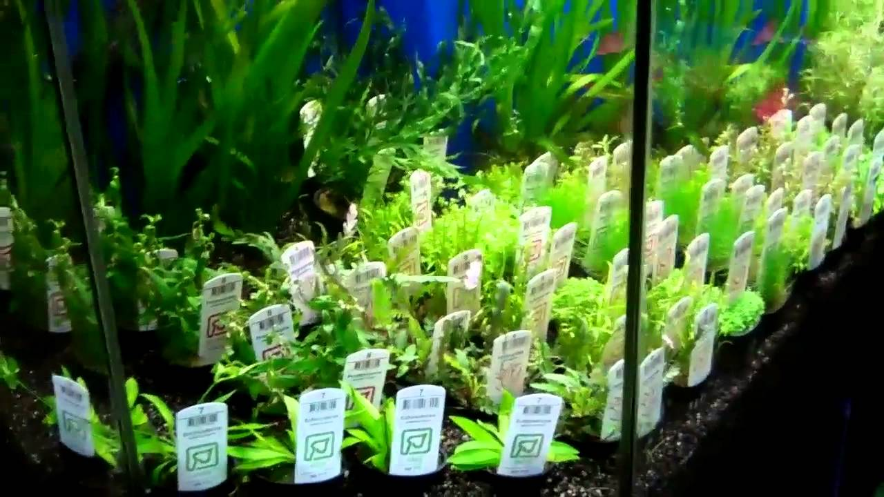 Aquarium plants ideas be equipped best substrate for planted freshwater aquarium be equipped sand substrate planted aquarium