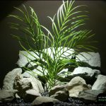 : Aquarium plants ideas be equipped cool betta fish tank ideas be equipped fish tank landscape ideas be equipped best light for 10 gallon planted tank