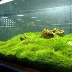 : Aquarium plants ideas be equipped planting aquarium plants in gravel be equipped amazing aquascape be equipped awesome fish tank setups