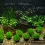 : Aquarium plants ideas be equipped small aquarium set be equipped aquarium tank decoration ideas be equipped mini planted tank
