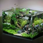 : Aquarium plants ideas be equipped small fish tank designs be equipped fish bowl decorations ideas be equipped natural looking fish tank