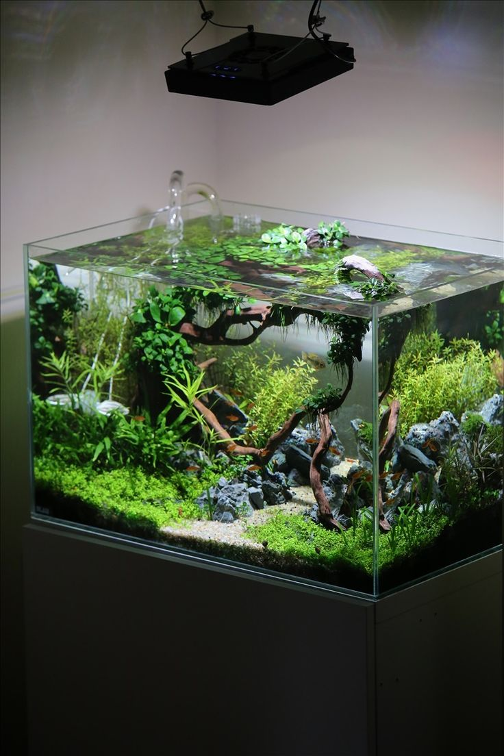 Aquarium Plants Ideas Be Equipped Natural Stone For Aquarium Be Equipped Aquarium Layout Design Be Equipped Natural Aquascape Aquarium Plants Ideas 5 Top Visual Designs You Need To Know Inspiration Home Magazine