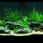 : Aquarium plants ideas be equipped substrate for planted aquarium with fish be equipped best all in one freshwater aquarium
