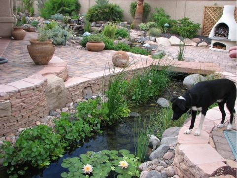 Backyard ponds be equipped small fish ponds with waterfalls be equipped small backyard pond designs