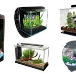 : Betta fish tanks and plus 1 gallon betta bowl and plus betta tropical fish and plus betta fish aquarium decorations