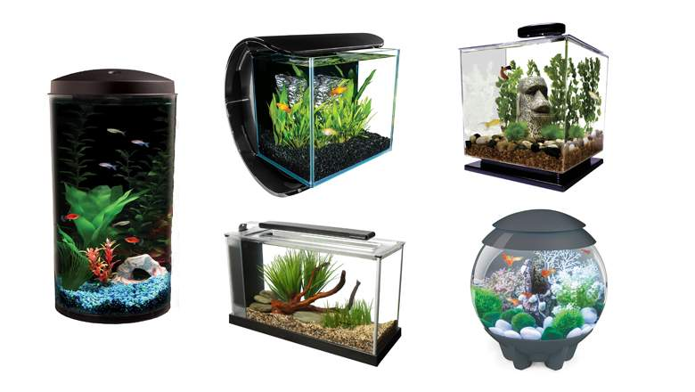 Betta fish tanks and plus 1 gallon betta bowl and plus betta tropical fish and plus betta fish aquarium decorations