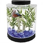 : Betta fish tanks and plus 1 gallon betta fish tank and plus fighting fish tank size and plus awesome betta tanks