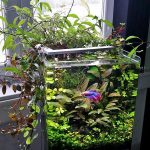 : Betta fish tanks and plus 5 gallon betta aquarium and plus five gallon fish bowl and plus cool fish tanks for sale