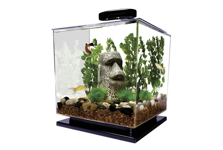 Betta fish tanks and plus best filter for betta 5 gallon and plus fish tank care and plus triple betta fish tank