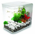 : Betta fish tanks and plus best heater for betta tank and plus freshwater fish and plus best betta fish tank with filter