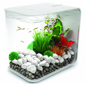 Betta fish tanks and plus best heater for betta tank and plus freshwater fish and plus best betta fish tank with filter