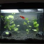 : Betta fish tanks and plus betta aquarium tank and plus tetra fish tank and plus 5ft fish tank