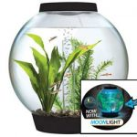 : Betta fish tanks and plus betta fish bowl and plus betta fish aquarium and plus cool betta fish tanks