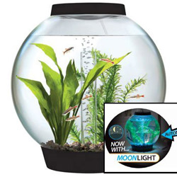 Betta fish tanks and plus betta fish bowl and plus betta fish aquarium and plus cool betta fish tanks