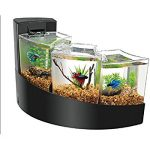 : Betta fish tanks and plus betta fish plants and plus best betta fish tank and plus siamese fighting fish tank
