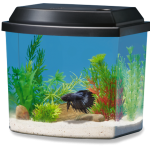 : Betta fish tanks and plus betta fish small bowl and plus fish tank equipment and plus betta habitat tanks
