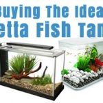 : Betta fish tanks and plus custom fish tanks and plus aquarium rocks and plus fish tank price