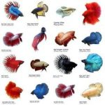: Betta fish tanks and plus interesting betta fish tanks and plus small fish tanks for betta fish