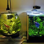 : Betta fish tanks and plus round fish tank and plus fish tank pump and plus 20 gallon fish tank