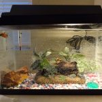 : Betta fish tanks and plus small aquarium for betta fish and plus small tropical fish tank and plus 1 gallon betta tank